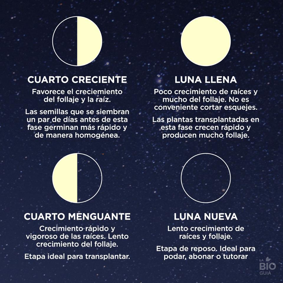 Wicca eclectica solitaria los esbats la luna azul y la for Fases de la luna hoy