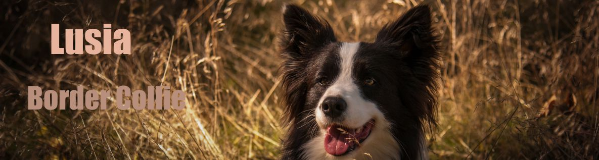 Lusia Border Collie