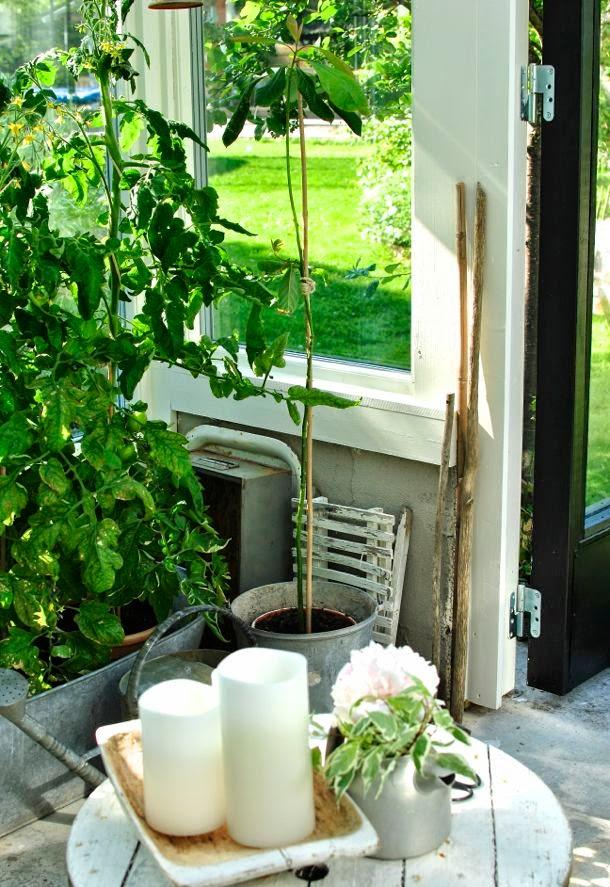 hannas växthus tomatplant kabeltrumma enjoycandles
