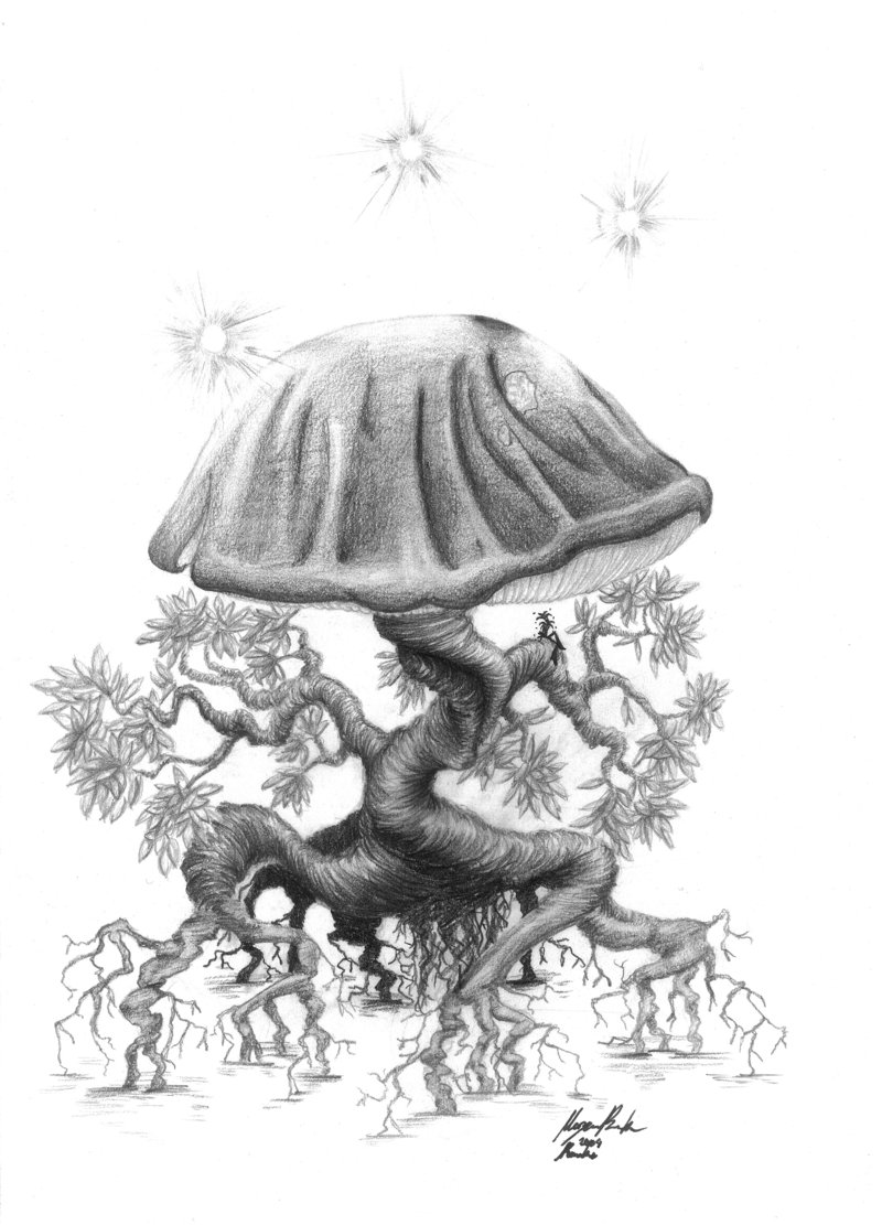 mushroom drawings the magic art of mushrooms
