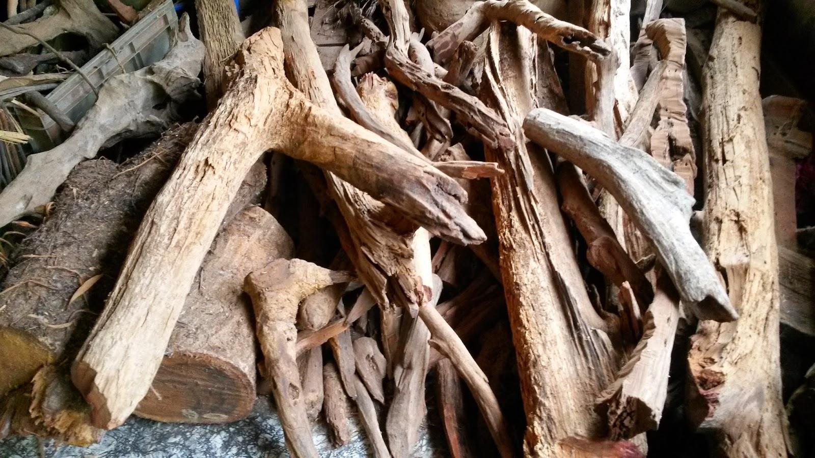Rumah Herba & Akar kayu, resdung, tradisional medicine, raja kayu