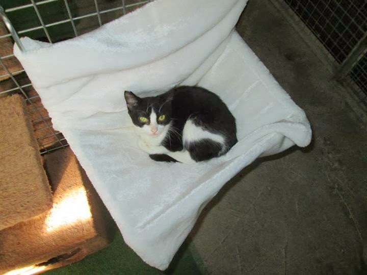 Josh the Loner searching for his forever home!