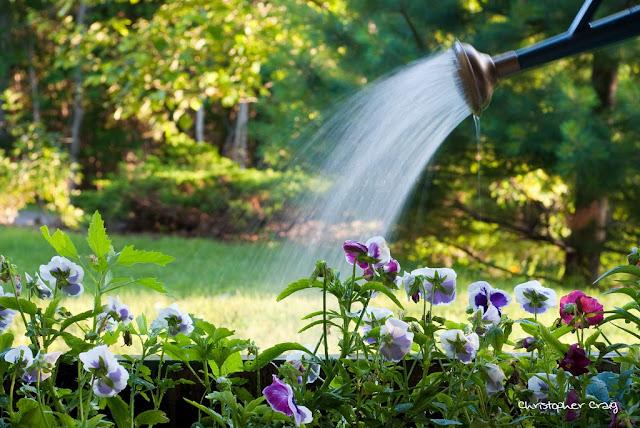 2016天津五险一金不可小看的浇水大学问用心灌溉满足植物的喝水需求- 园艺部落格2016亚运会金贤重