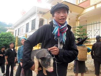 Lợn cắp nách ở vùng cao (Ảnh minh họa: Duy Ngợi/Báo Công Lý)