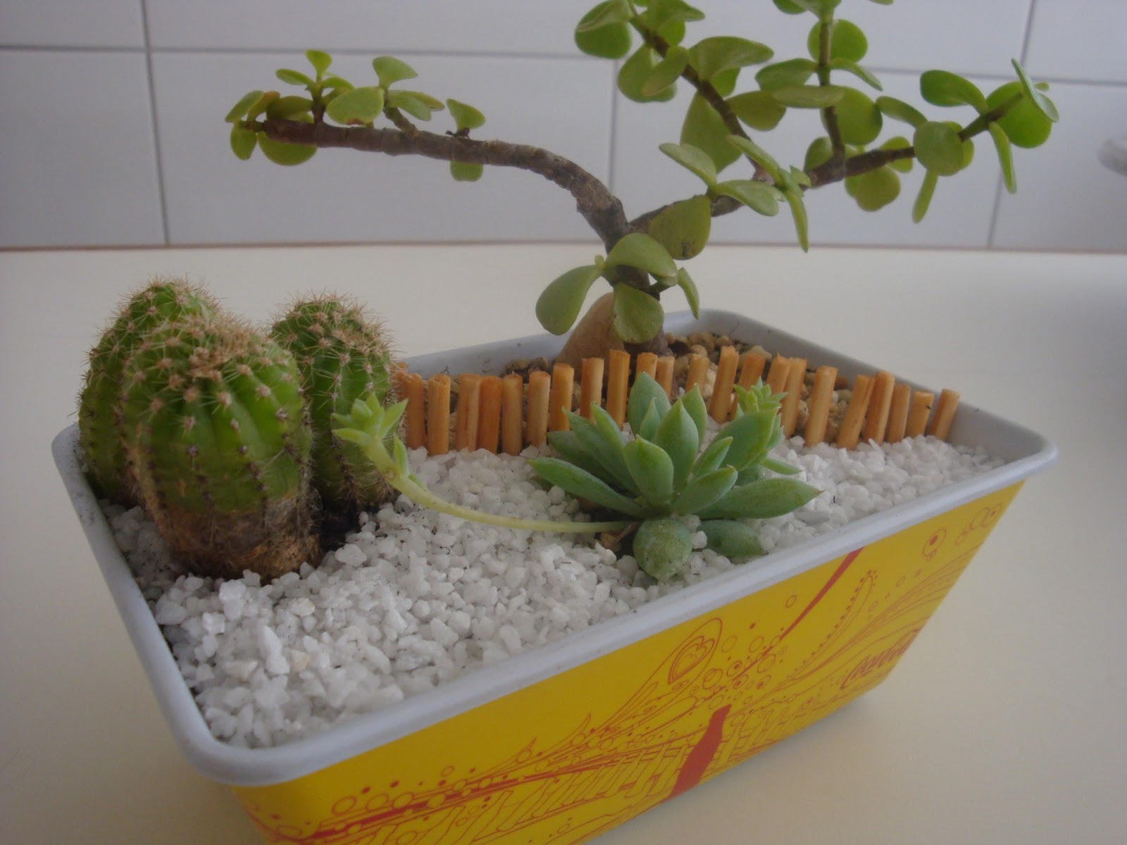 mini jardim reciclado:Se você quer fazer um mini-jardim, use o que tiver a mão, um pote