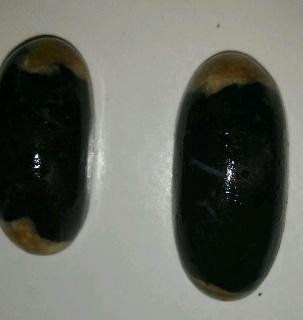 perawatan awal black opal porselin