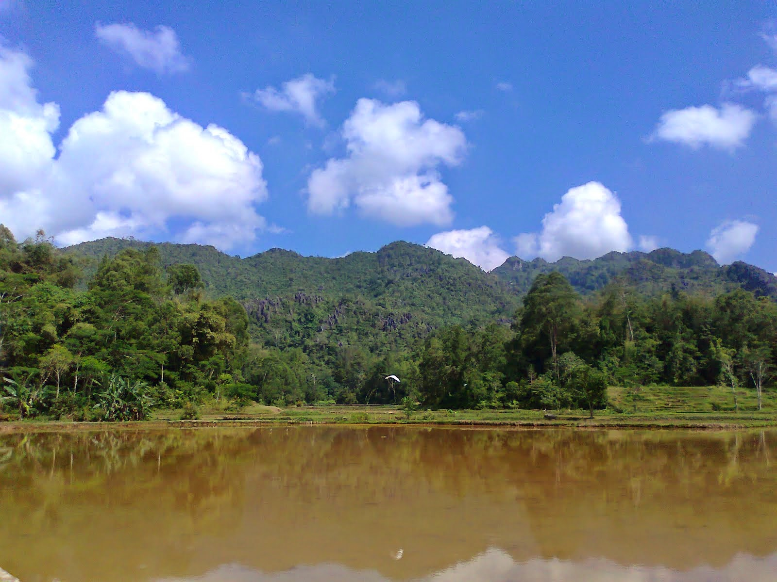 Sulawesi (Indonèsia)