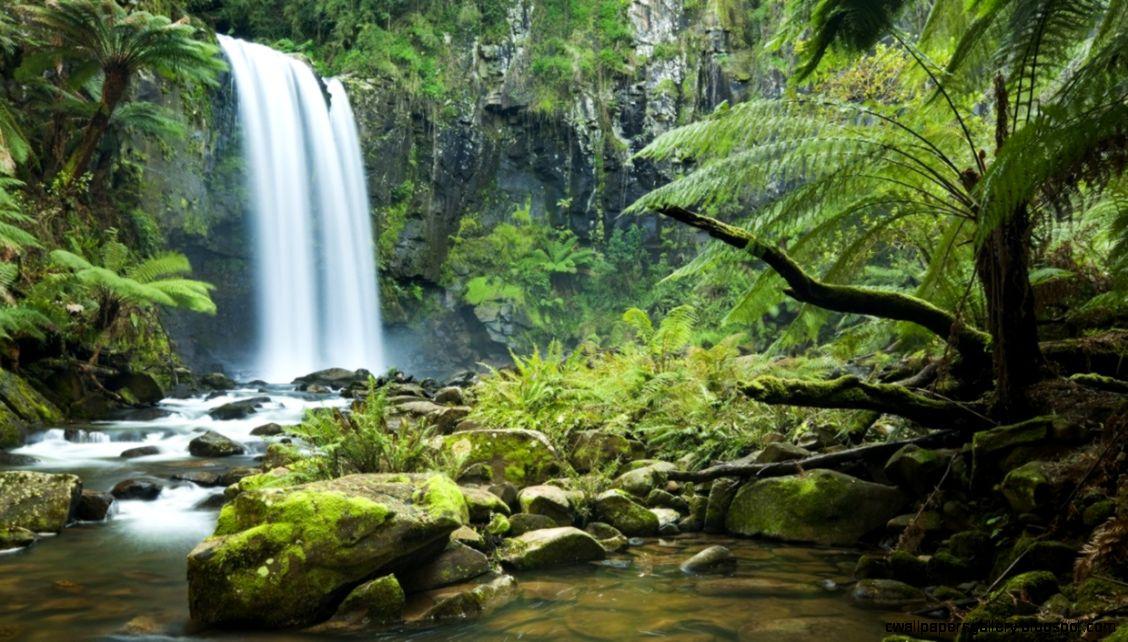 Rainforest Habitat   ThingLink