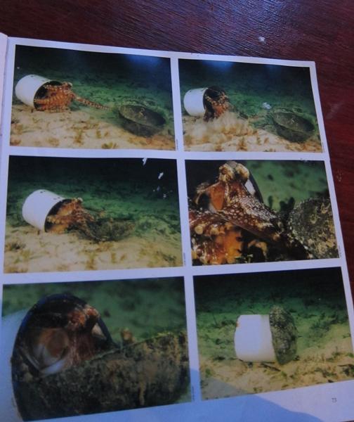 Mabul Water Bungalow: Moshi. Moshi. Meow.: Mabul!