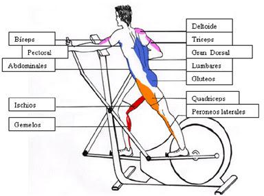 Bicicleta el ptica la m s completa de las m quinas aer bicas beneficios de la bicileta el ptica - Beneficios de la bici eliptica ...