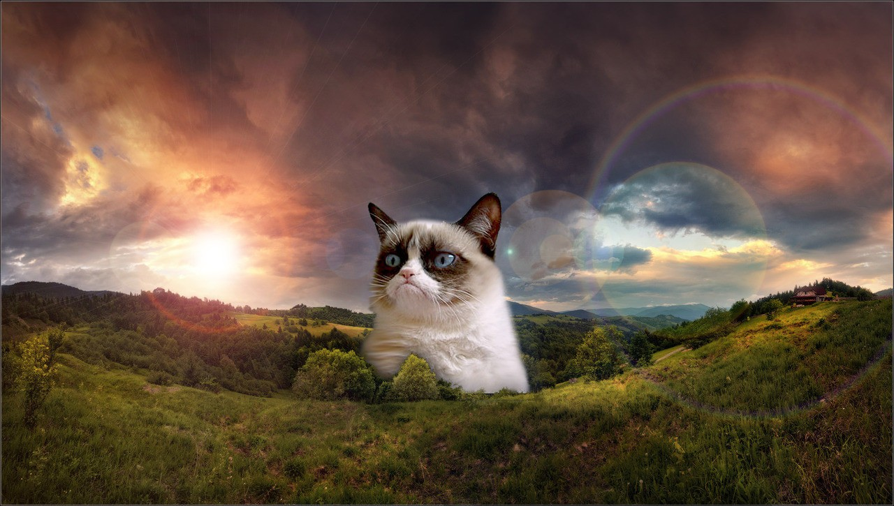 grumpy cat pictures funny wallpapers hd wallpapers. Black Bedroom Furniture Sets. Home Design Ideas