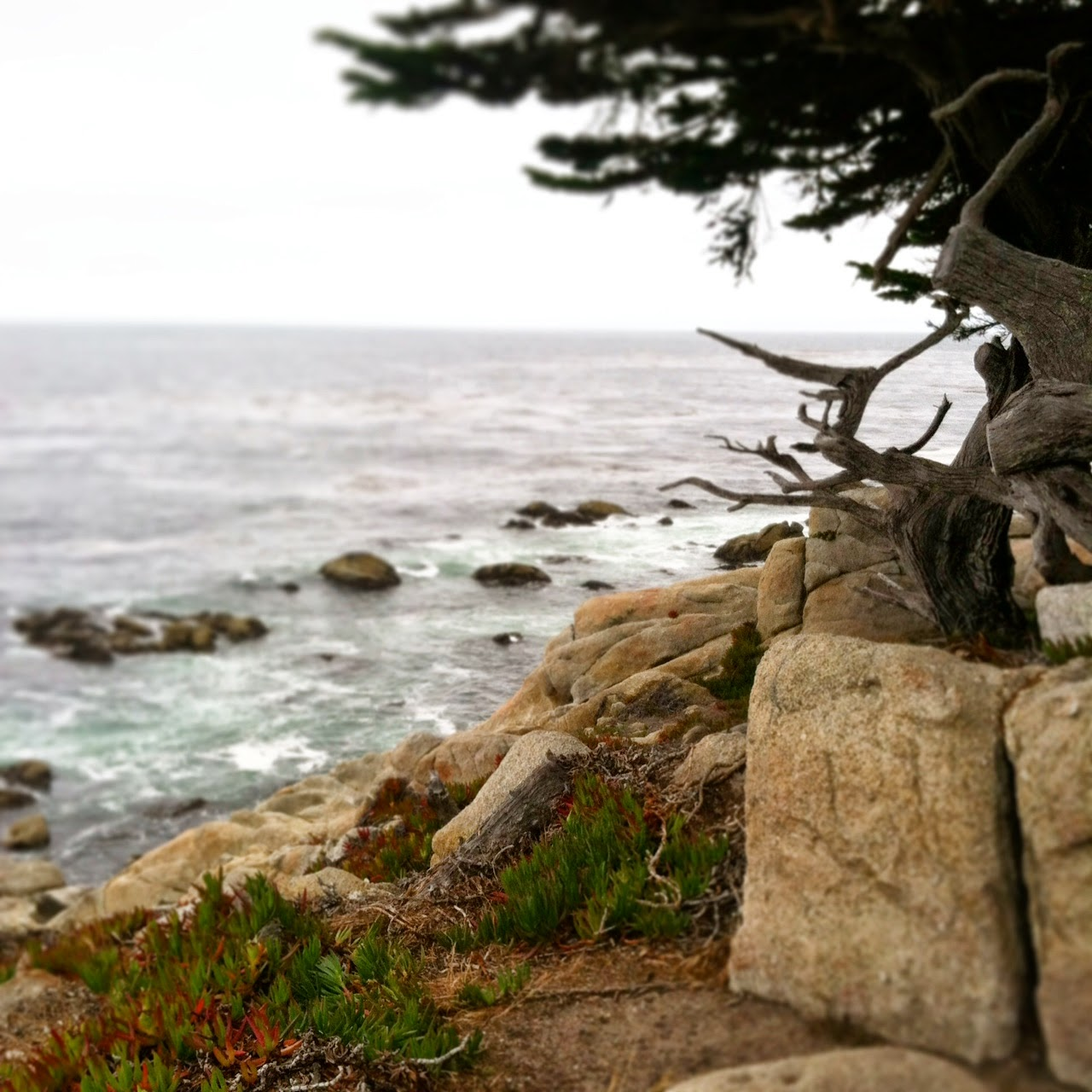 Favorite Places: 17 Mile Drive