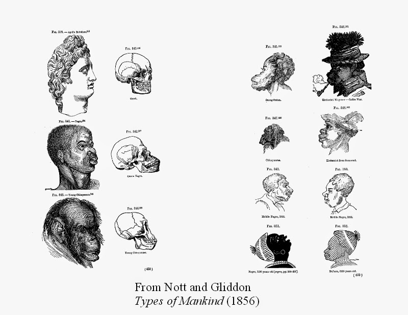 racial classification They conclude that while racial groups are characterized by different allele frequencies, this does not mean that racial classification is a natural taxonomy of the human species, because multiple other genetic patterns can be found in human populations that crosscut racial distinctions.