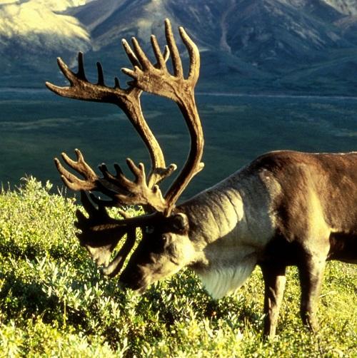 R Reindeer Real Neko Random: December ...