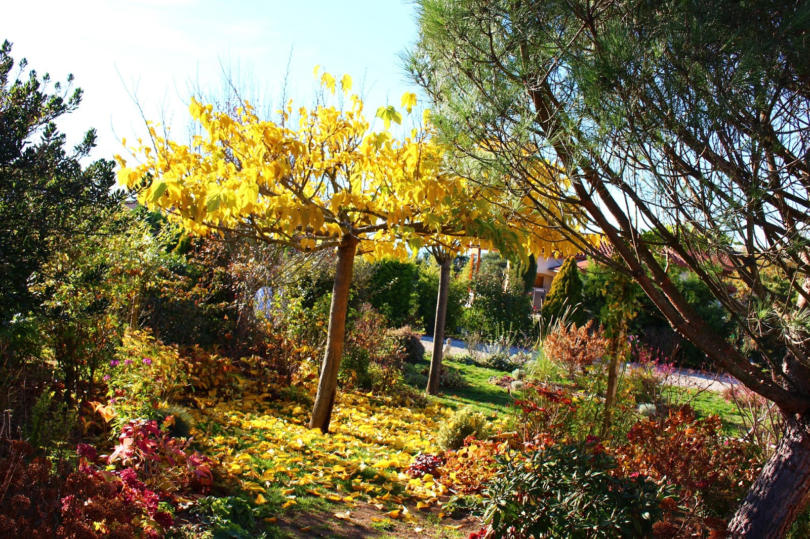 Roses du jardin ch neland travaux du jardin en novembre for Jardin que planter en novembre