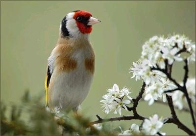 %D8%B7%D9%8A%D9%88%D8%B129 صور رمانسية طبيعية لأجمل الطيور 2014