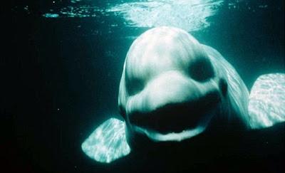 ballena que hablaba como humano