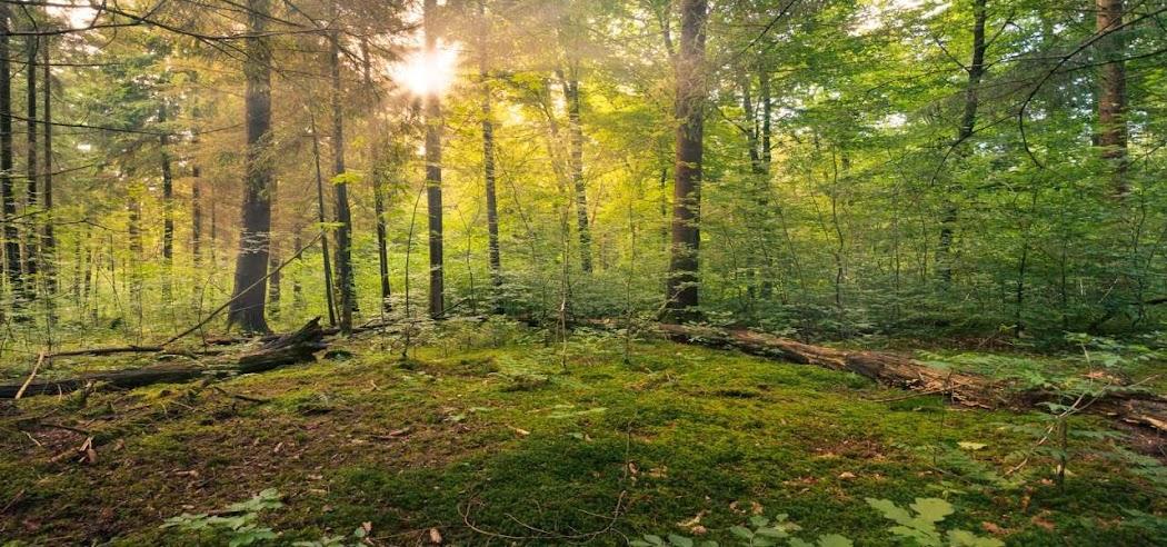 Primera tienda online de formación y turismo ecológioc
