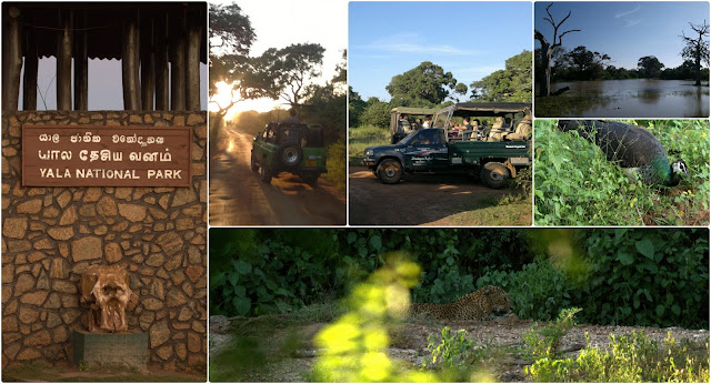 Safari in Yala National Park - Southern Sri Lanka - Leopards - Safari Jeeps