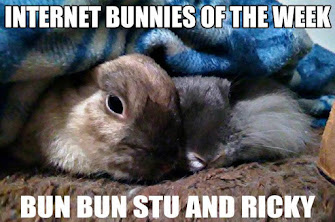 INTERNET BUNNIES OF THE WEEK