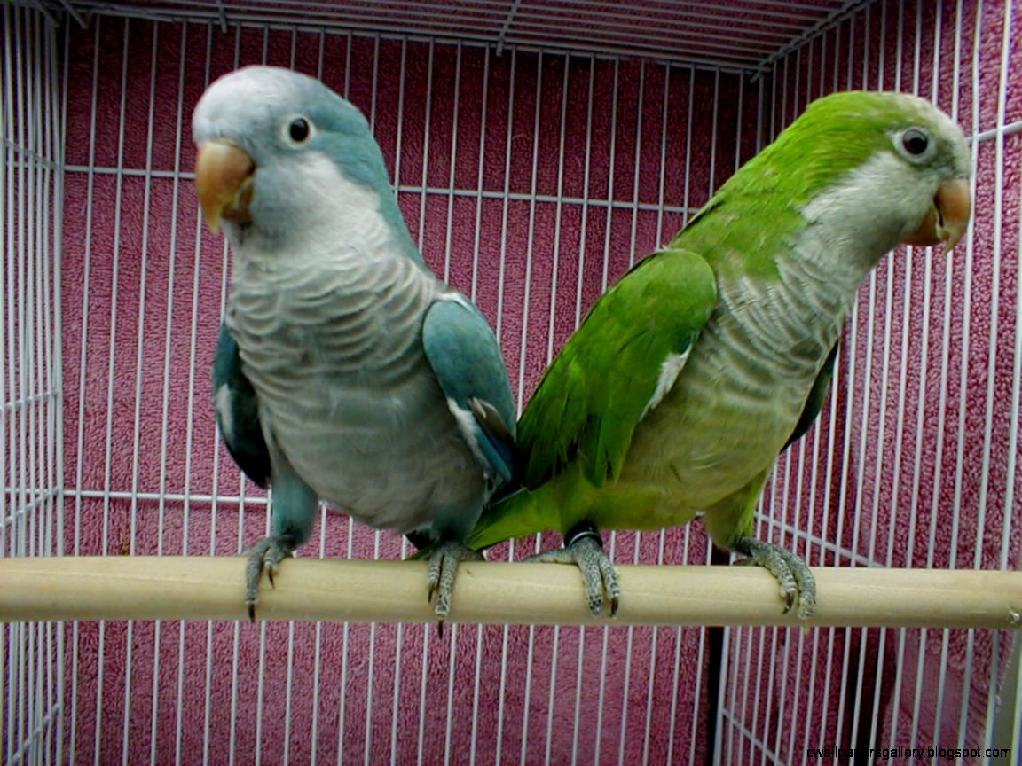 Top 10 Best Kind Of Pet Parrots