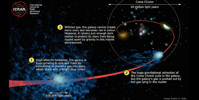 This artist's impression of the 'quenching' process shows how a normal blue (star-forming) galaxy lost its gas while falling into the Coma Cluster very early on in its formation. Credit: Cameron Yozin, ICRAR/UWA