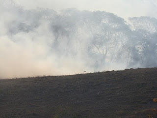 Incendio em Viçosa. MEiterer