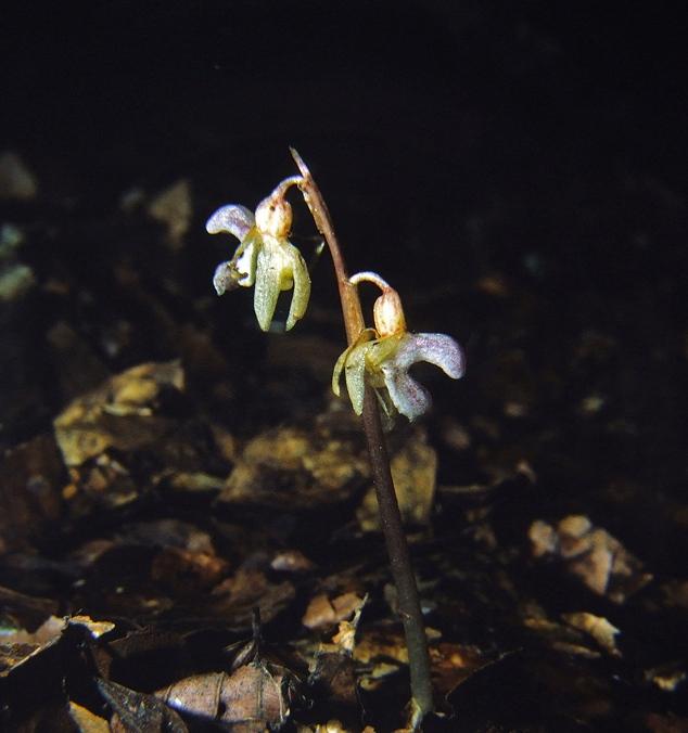 Help us find Britain's rarest plant!
