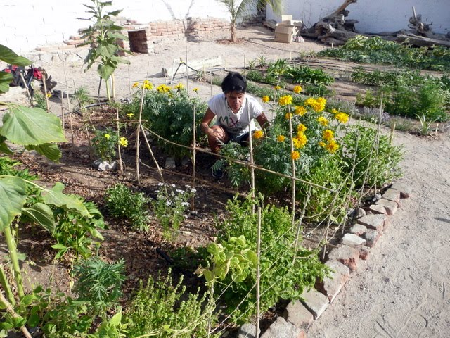 Noviembre 2011 ecology project international for Jardineria navarro