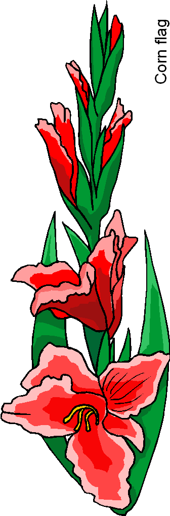 Corn Flag Flower Free Clipart