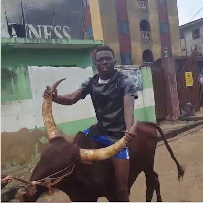 Comedian Akpororo riding his cow to Warri,Akpororo on a cow,Akpororo rides a cow,Akpororo and cow 8