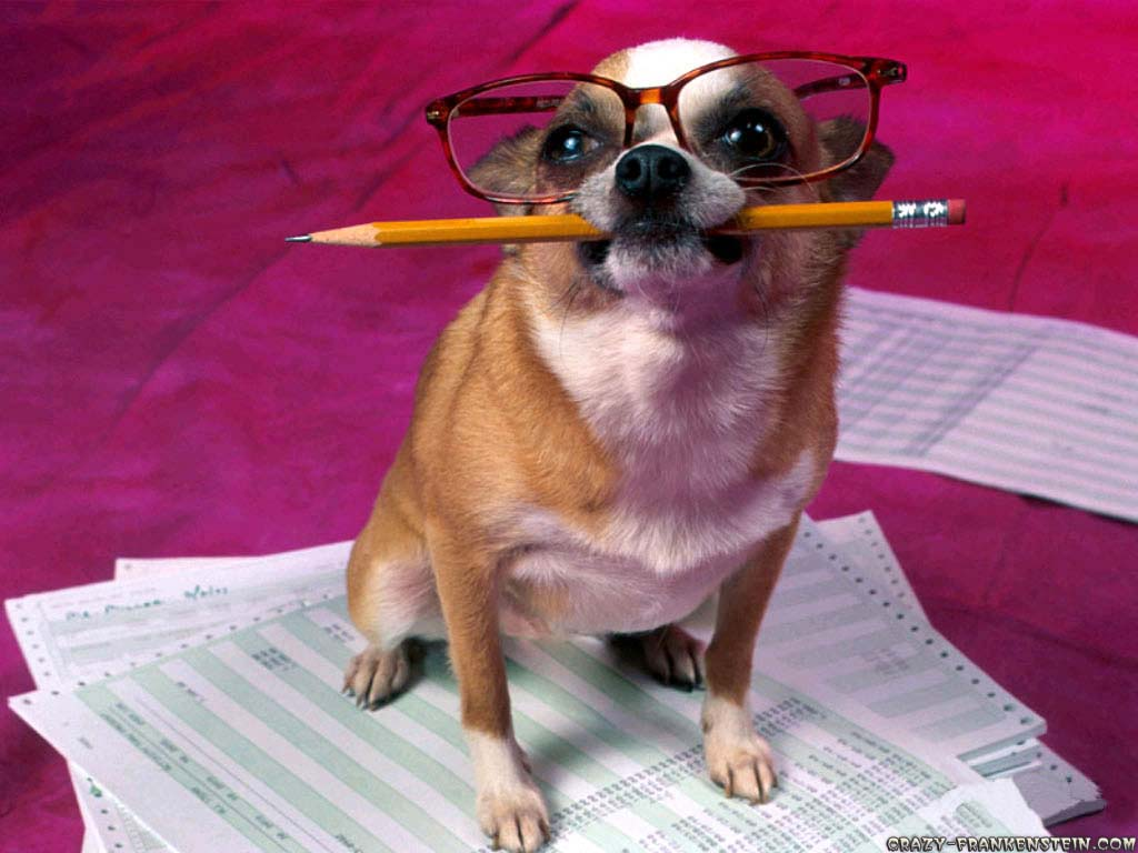 http://3.bp.blogspot.com/-LnCV1jQ_nOM/ULWyk5nAy5I/AAAAAAAAC2s/PbN205j_iAw/s1600/funny-dog-writer-animal-wallpapers.jpg