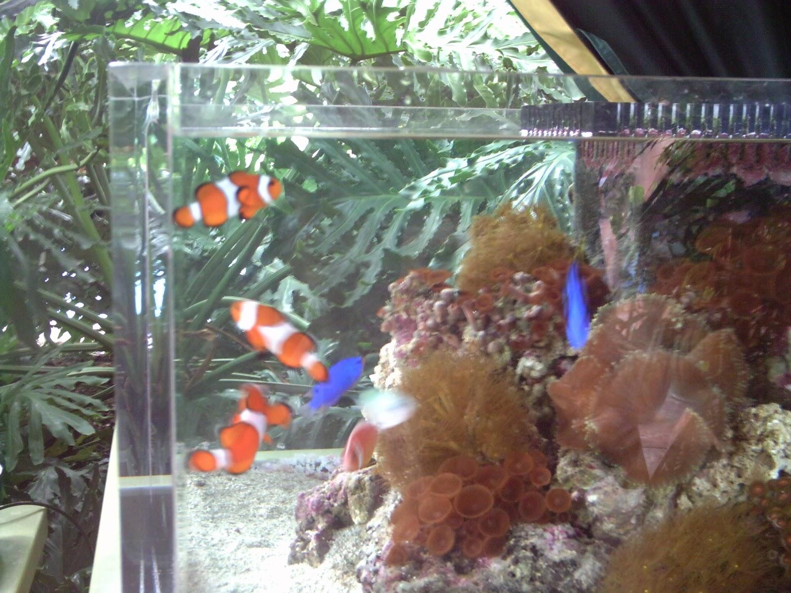 Freshwater aquarium fish orlando -  Fish