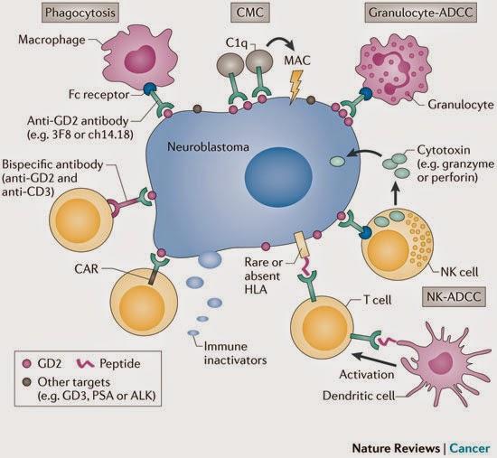 neuroblastoma scheme
