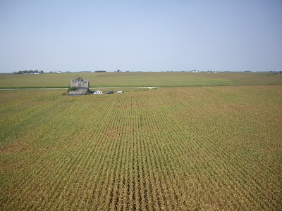 image of corn from uav