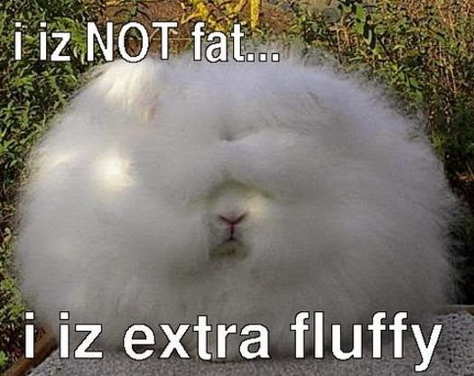 fluffy not fat cat meme