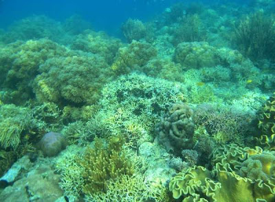 Labuan Bajo Under water vacation