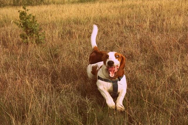 dogbreeds4.blogspot