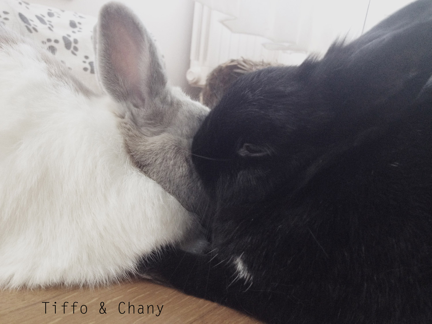 Tiffo e chany