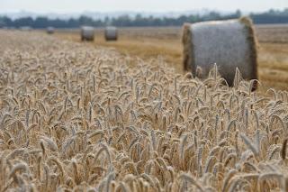 la festa dell'aratura domenica 6 ottobre nell'azienda agricola borgoluce