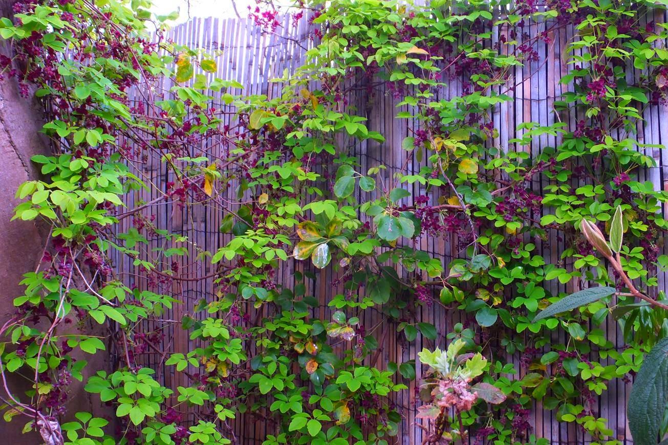 Alternative Eden Exotic Garden: Curious Looking Fruits