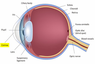 Corneal Disease Some Diseases And Disorders Affecting The Cornea