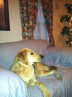 Sweet Chadwick Relaxing... November 2012
