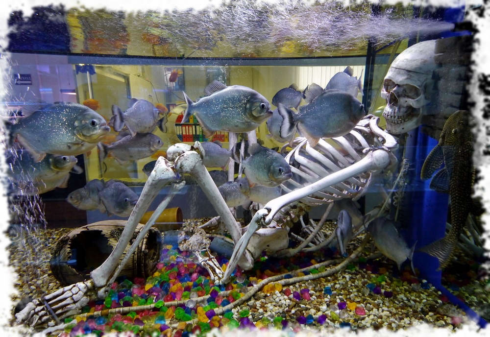 виды рыб аквариумных с фото и названиями