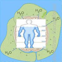 Variação da taxa de água nos organismos vivos.