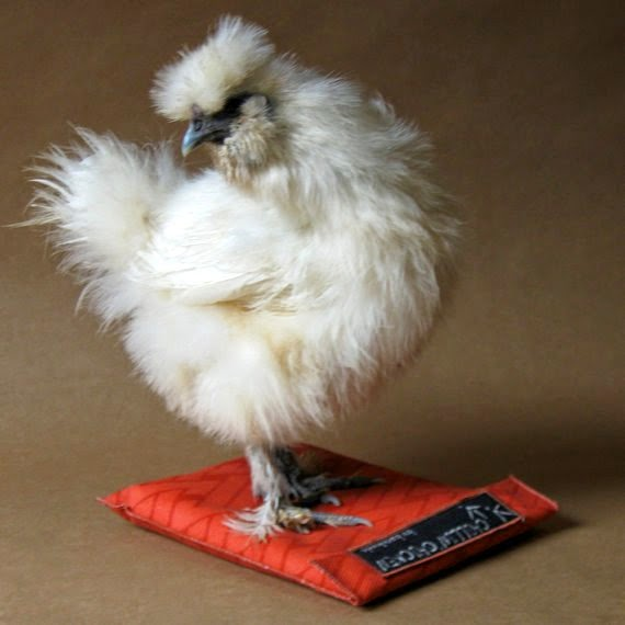 https://www.etsy.com/listing/103983432/reusable-chillin-chicken-cooler-pad?ref=favs_view_5