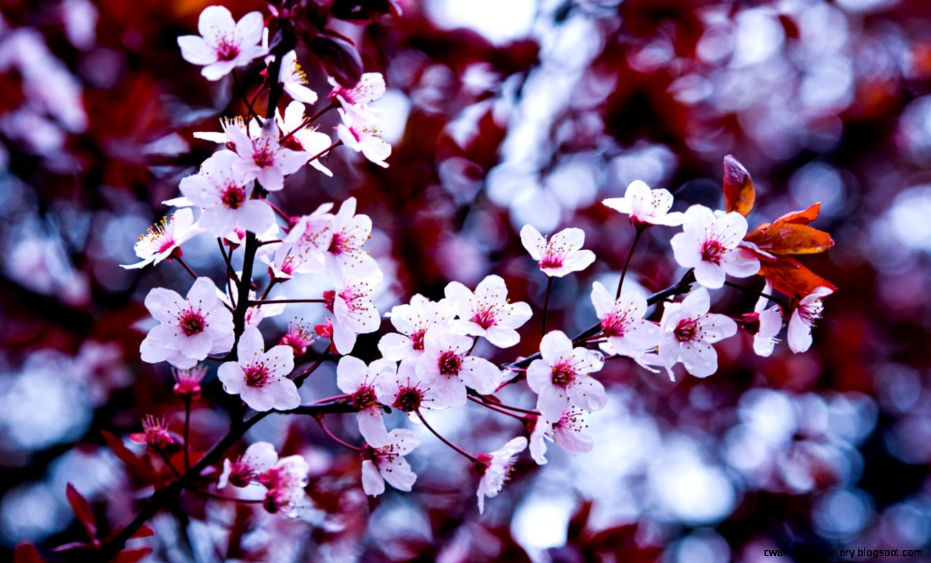 43 Spring Flowers Android Compatible Wallpapers