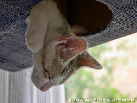 キャットタワーで眠る子猫