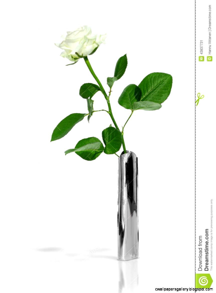 White Rose In A Stylish Metal Vase Stock Photo   Image 43837731