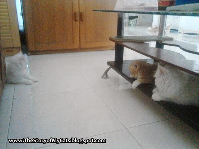 kucing mainan bersama